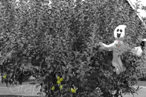 Black and white photo of a cloth ghost hanging from a tree, with bright green apples to the left of the ghost